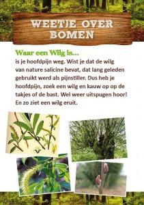 Weetje over bomen